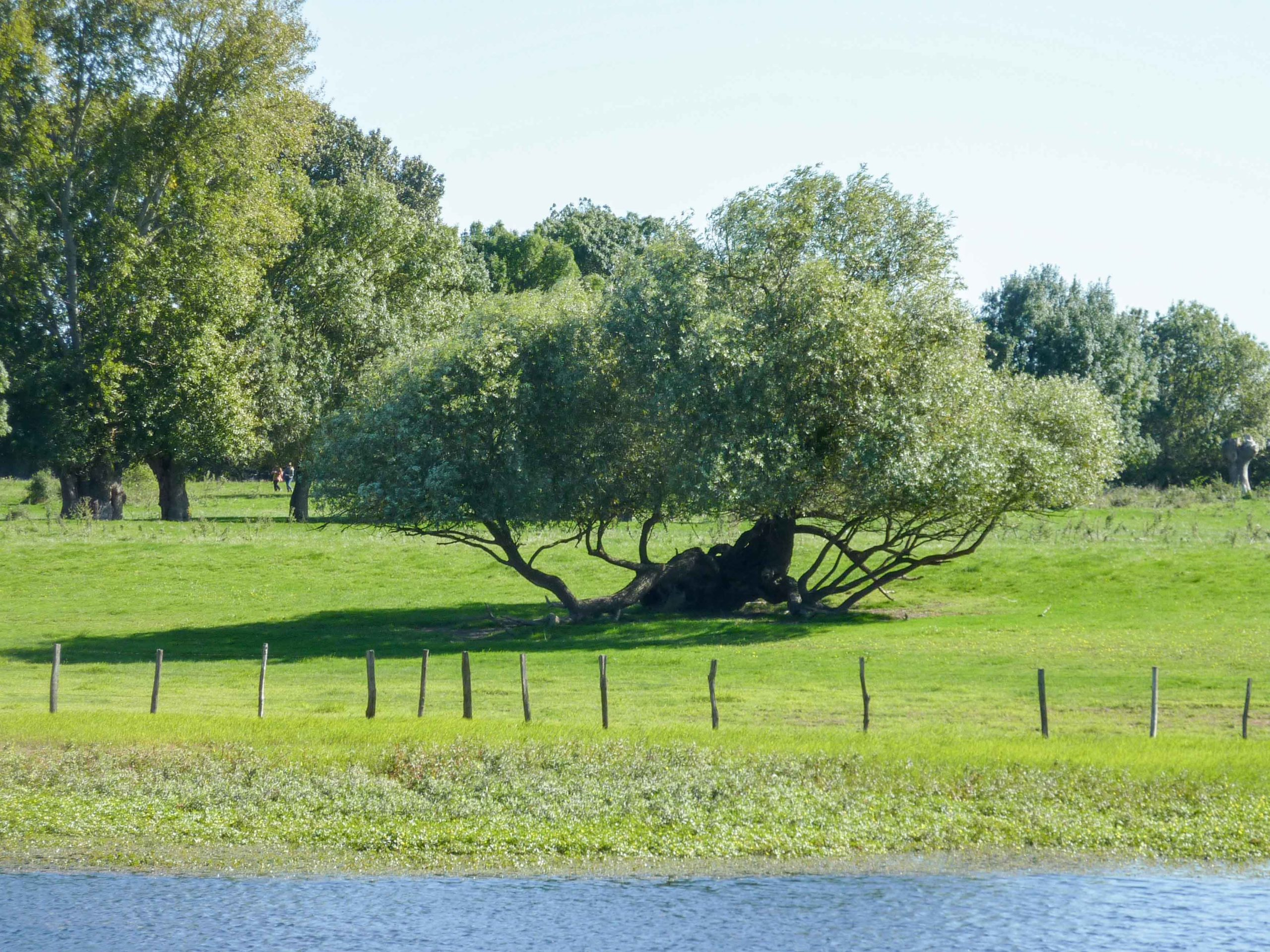Land art Ingrandes (14)